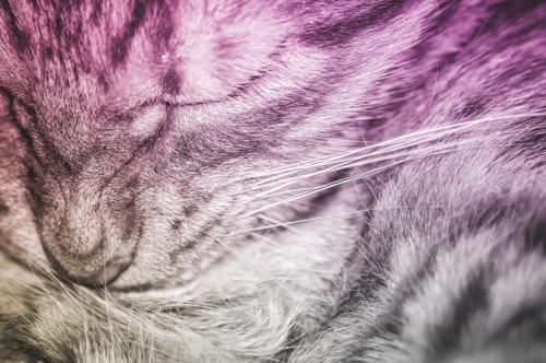 Closeup portrait of a cute sleeping cat - slon.pics - free stock photos and illustrations