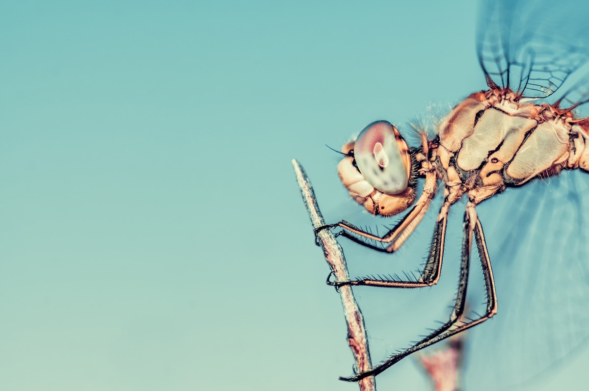 Dragonfly on a twig - slon.pics - free stock photos and illustrations