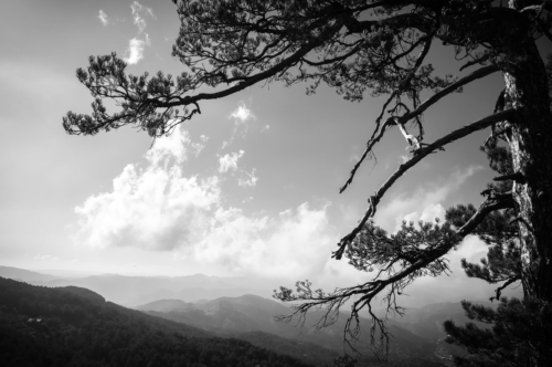 Mountain View. Black and white image - slon.pics - free stock photos and illustrations