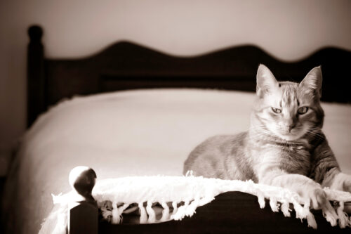 Suspiciously looking pet cat - slon.pics - free stock photos and illustrations