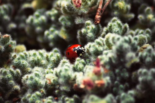 Close up of a ladybug - slon.pics - free stock photos and illustrations