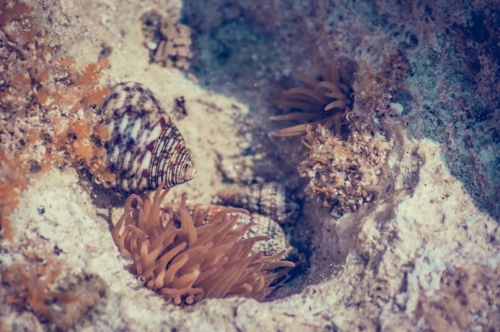 Corals and Crayfish. Macro photo - slon.pics - free stock photos and illustrations