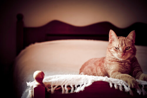 Ginger Cat laying on a bed - slon.pics - free stock photos and illustrations