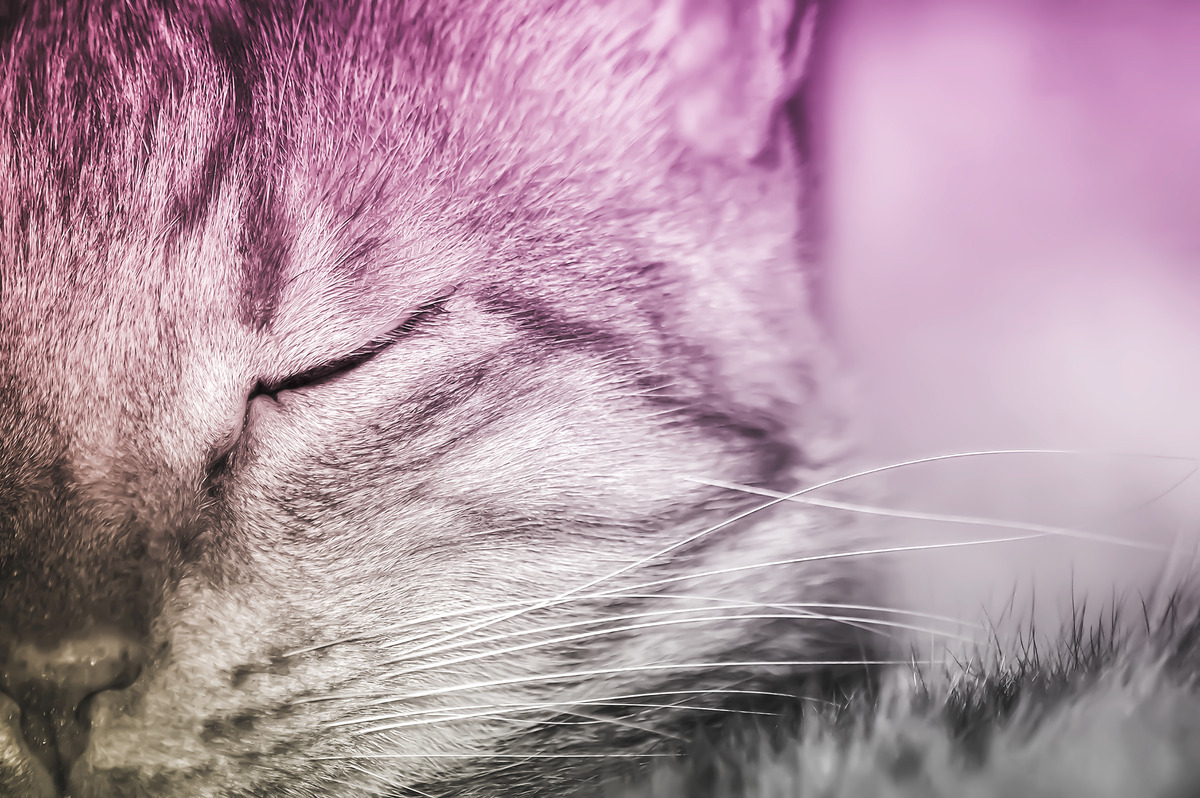 Half-face portrait of a cat - slon.pics - free stock photos and illustrations