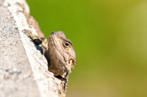 Lizard head on green background - slon.pics - free stock photos and illustrations
