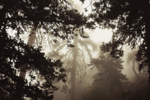 Misty woods - slon.pics - free stock photos and illustrations