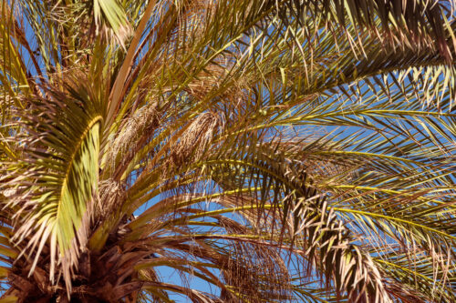 Close up upward view of tropical palm tree - slon.pics - free stock photos and illustrations