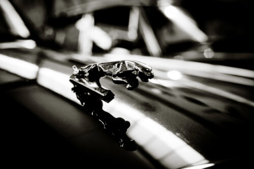Prancing Cat on the bonnet of a Jaguar Car - slon.pics - free stock photos and illustrations
