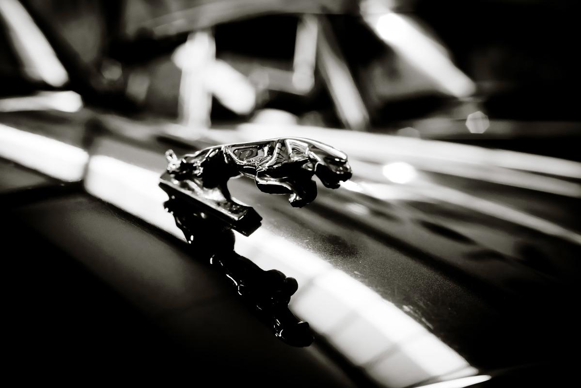 Prancing Cat on the bonnet of a Jaguar Car - slon.pics - free stock photos and illustrations