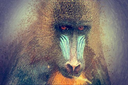 Adult mandrill portrait. Digital Illustration - slon.pics - free stock photos and illustrations