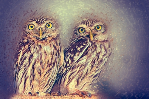 Athene Owl Illustration. Digital Illustration - slon.pics - free stock photos and illustrations