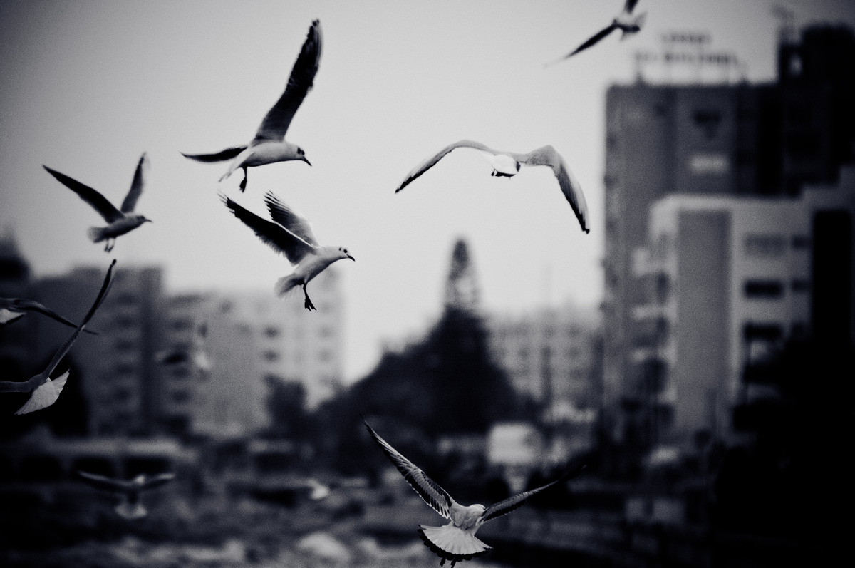 Cityscape with seagulls. Black and white photo with film grain effect - slon.pics - free stock photos and illustrations
