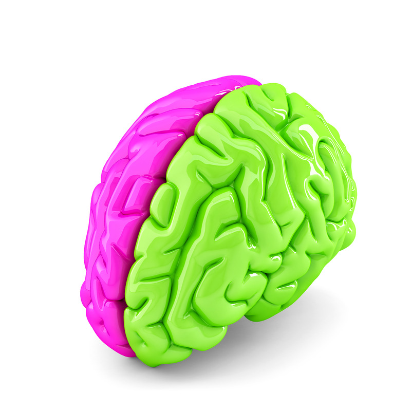 Creative brain concept. Isolated. Contains clipping path - slon.pics - free stock photos and illustrations