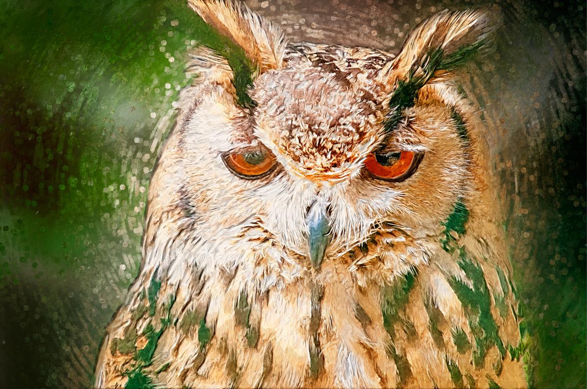 Drawn Owl Portrait. Digital Illustration - slon.pics - free stock photos and illustrations