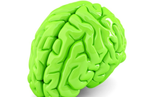 Green human brain. 3D illustration. Isolated. Contains clipping path - slon.pics - free stock photos and illustrations