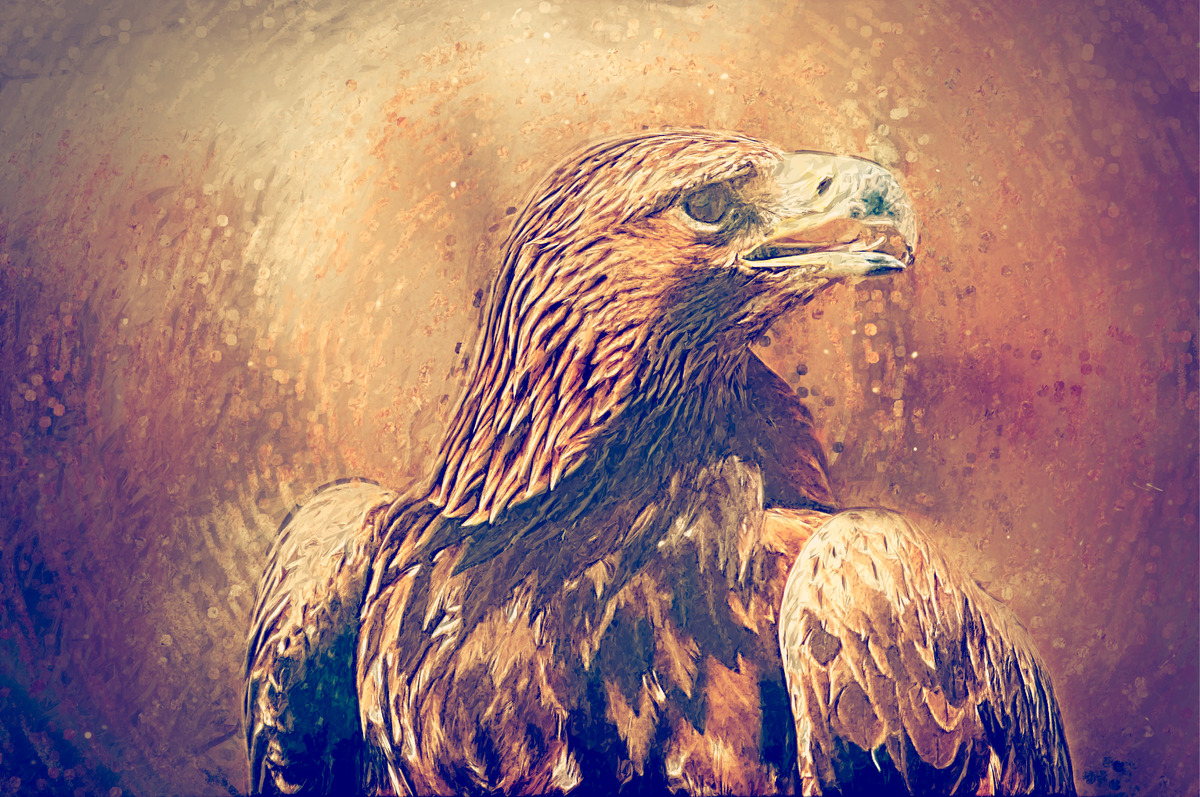 Hawk portrait. Digital Illustration - slon.pics - free stock photos and illustrations