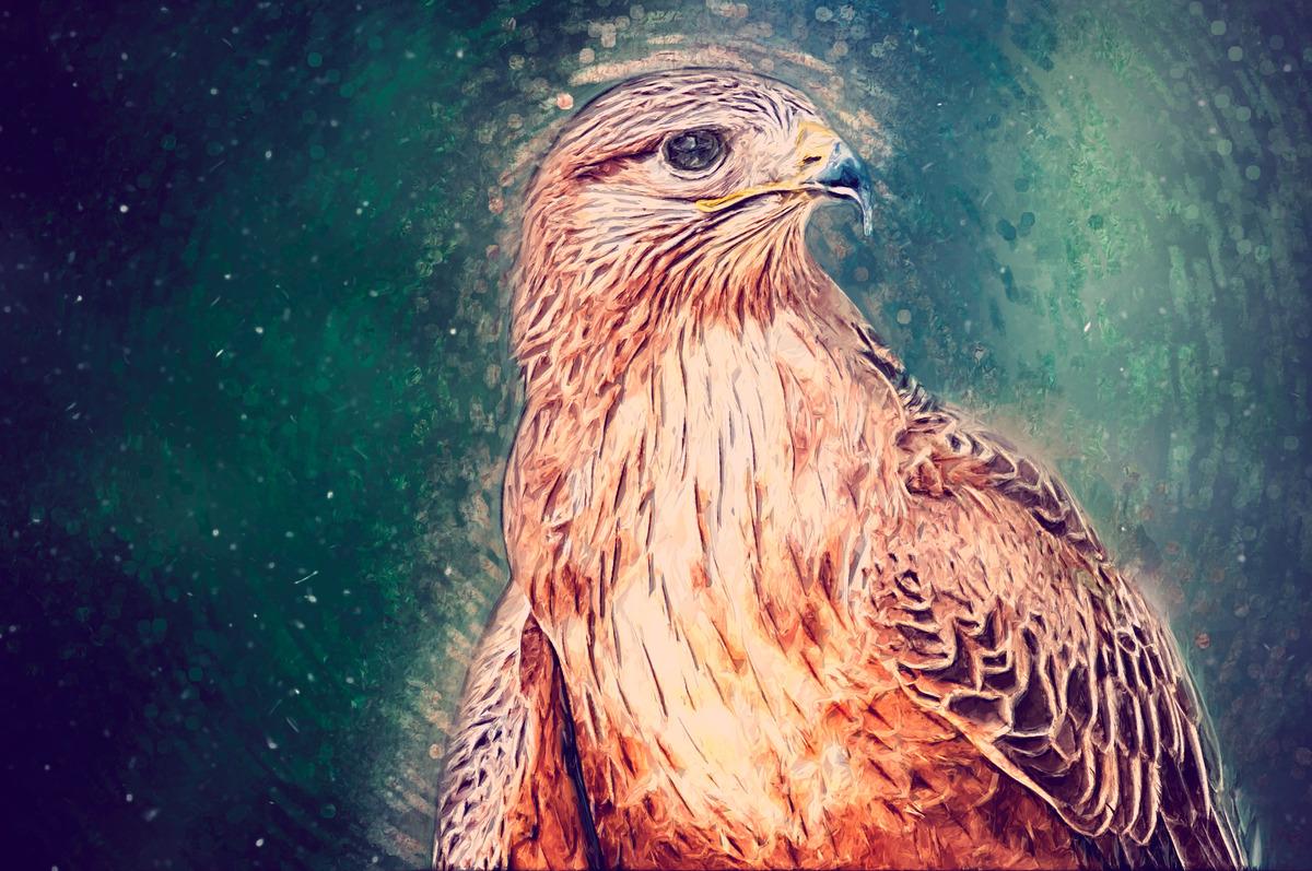 Hawk sketch portrait illustration - slon.pics - free stock photos and illustrations
