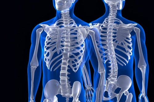 Human skeleton. Front and back view. Contains clipping path - slon.pics - free stock photos and illustrations