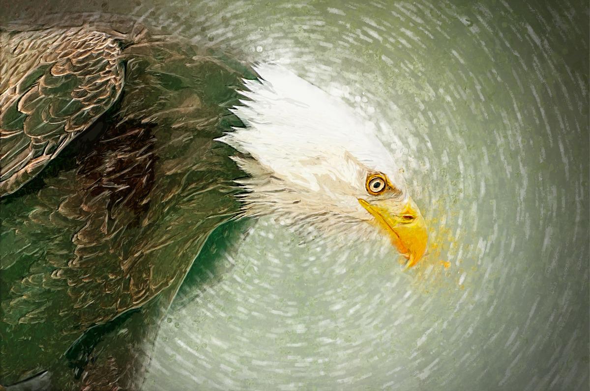 Illustration of Bald Eagle. Digital Illustration - slon.pics - free stock photos and illustrations