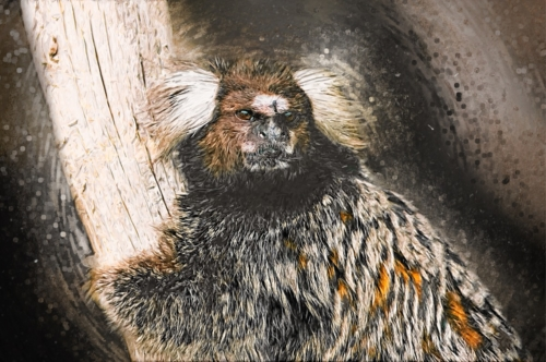 Marmoset sketch portrait. Digital Illustration - slon.pics - free stock photos and illustrations
