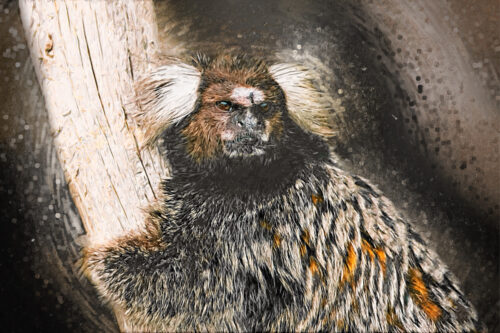 Marmoset sketch portrait. Digital Illustration - slon.pics - free stock photos and illustrations