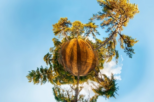 Miniature planet with pine forest. Stereographic projection. - slon.pics - free stock photos and illustrations