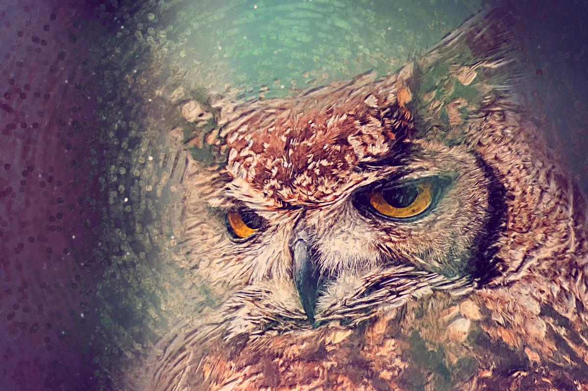 Owl close-up portrait. Digital Illustration - slon.pics - free stock photos and illustrations