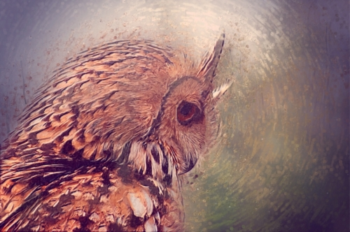 Owl closeup portrait. Digital Illustration - slon.pics - free stock photos and illustrations