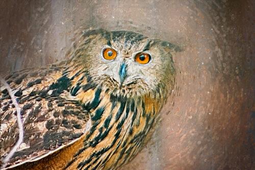 Owl portrait. Digital Illustration - slon.pics - free stock photos and illustrations