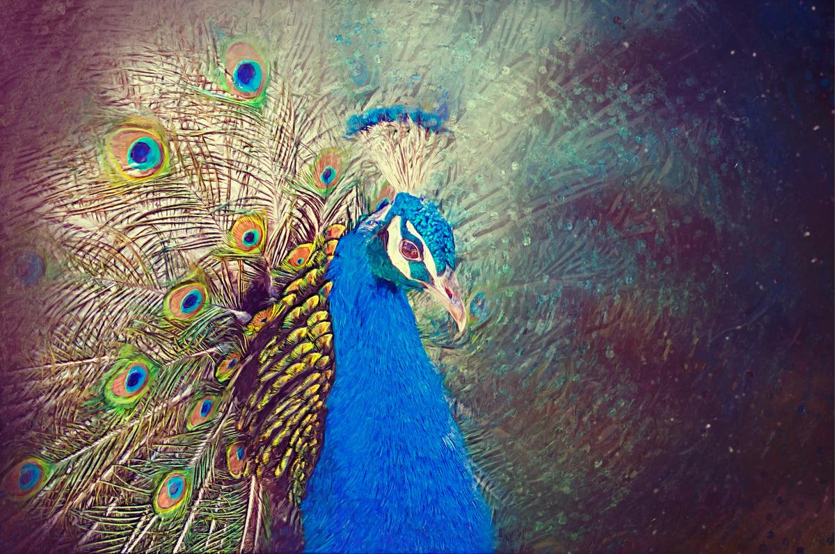 Peacock portrait. Digital Illustration - slon.pics - free stock photos and illustrations