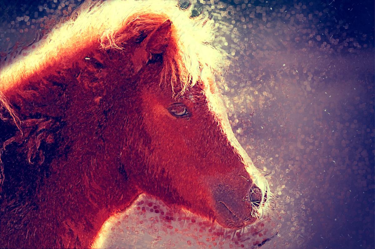 Pony portrait. Digital Illustration - slon.pics - free stock photos and illustrations