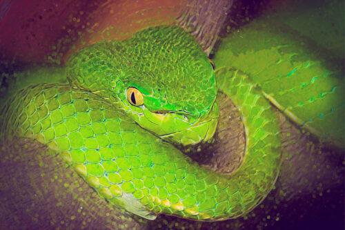 Python portrait. Digital Illustration - slon.pics - free stock photos and illustrations