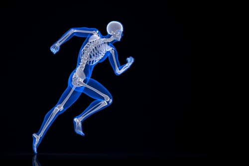 Running skeleton. Contains clipping path. - slon.pics - free stock photos and illustrations