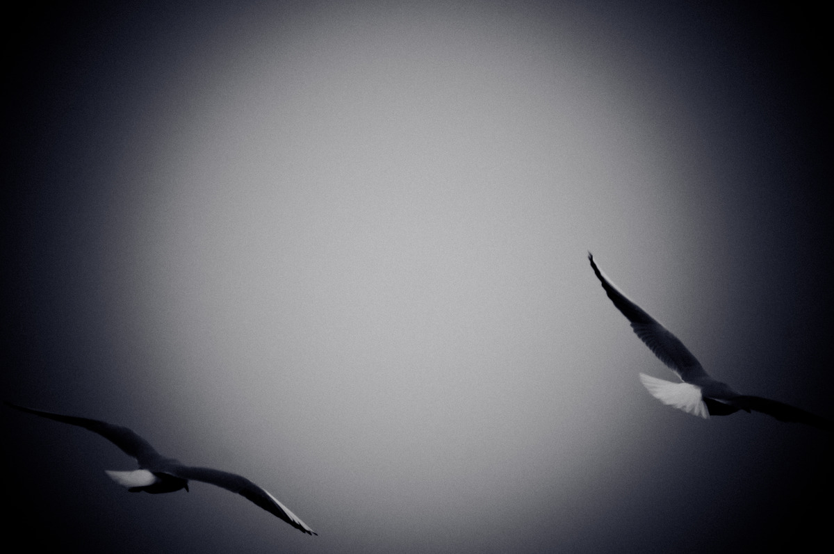 Seagulls Flying Over Sea. Black and white photo with film grain effect - slon.pics - free stock photos and illustrations