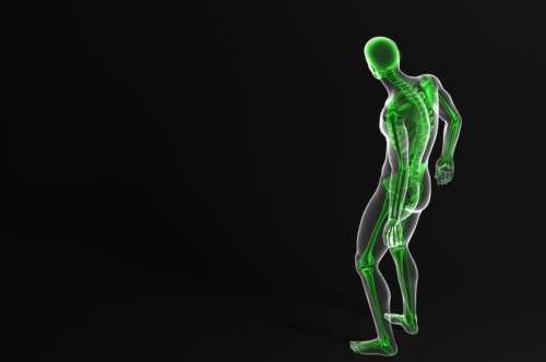 Skeleton. Rear view. Contains clipping path - slon.pics - free stock photos and illustrations
