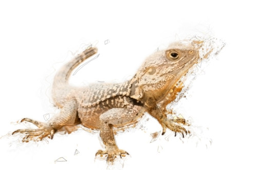 Sketch illustration of a lizard. Isolated. Contains clipping path - slon.pics - free stock photos and illustrations