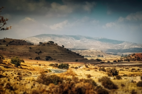 Yellow hills and bushes. Mediterranean landscape - slon.pics - free stock photos and illustrations