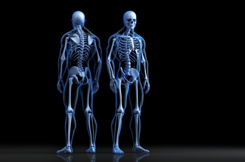 Human Skeleton. Front and rear view. 3D illustration - slon.pics - free stock photos and illustrations
