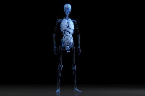 Male anatomy - slon.pics - free stock photos and illustrations