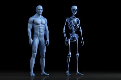 Male anatomy illustration. The Skeleton. 3D illustration - slon.pics - free stock photos and illustrations