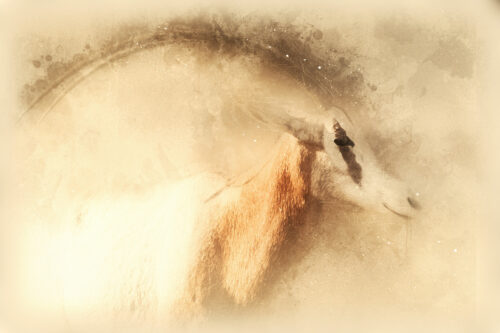 Oryx Scimitar portrait. Digital illustration - slon.pics - free stock photos and illustrations