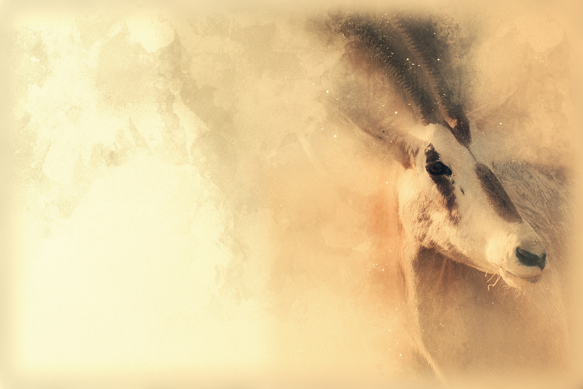 Oryx Scimitar. Digital illustration - slon.pics - free stock photos and illustrations