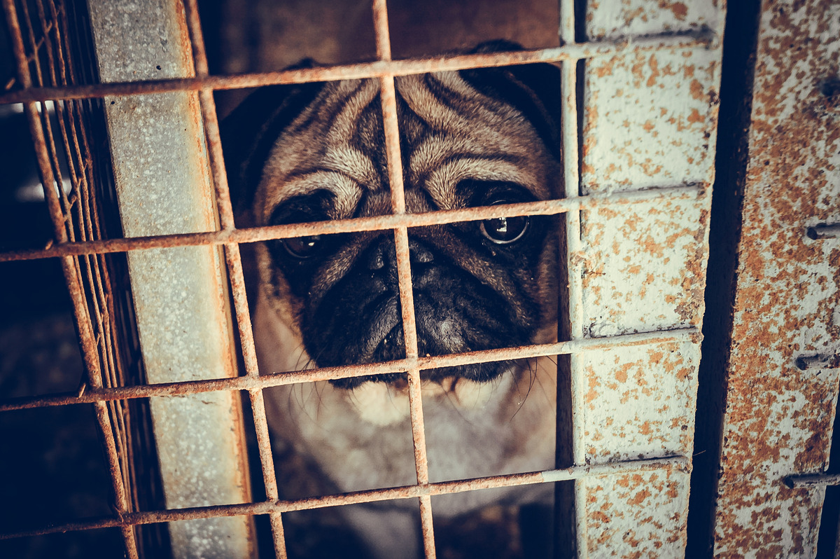 Sad dog in the shelter - slon.pics - free stock photos and illustrations