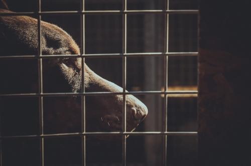 Shelter Dog - slon.pics - free stock photos and illustrations