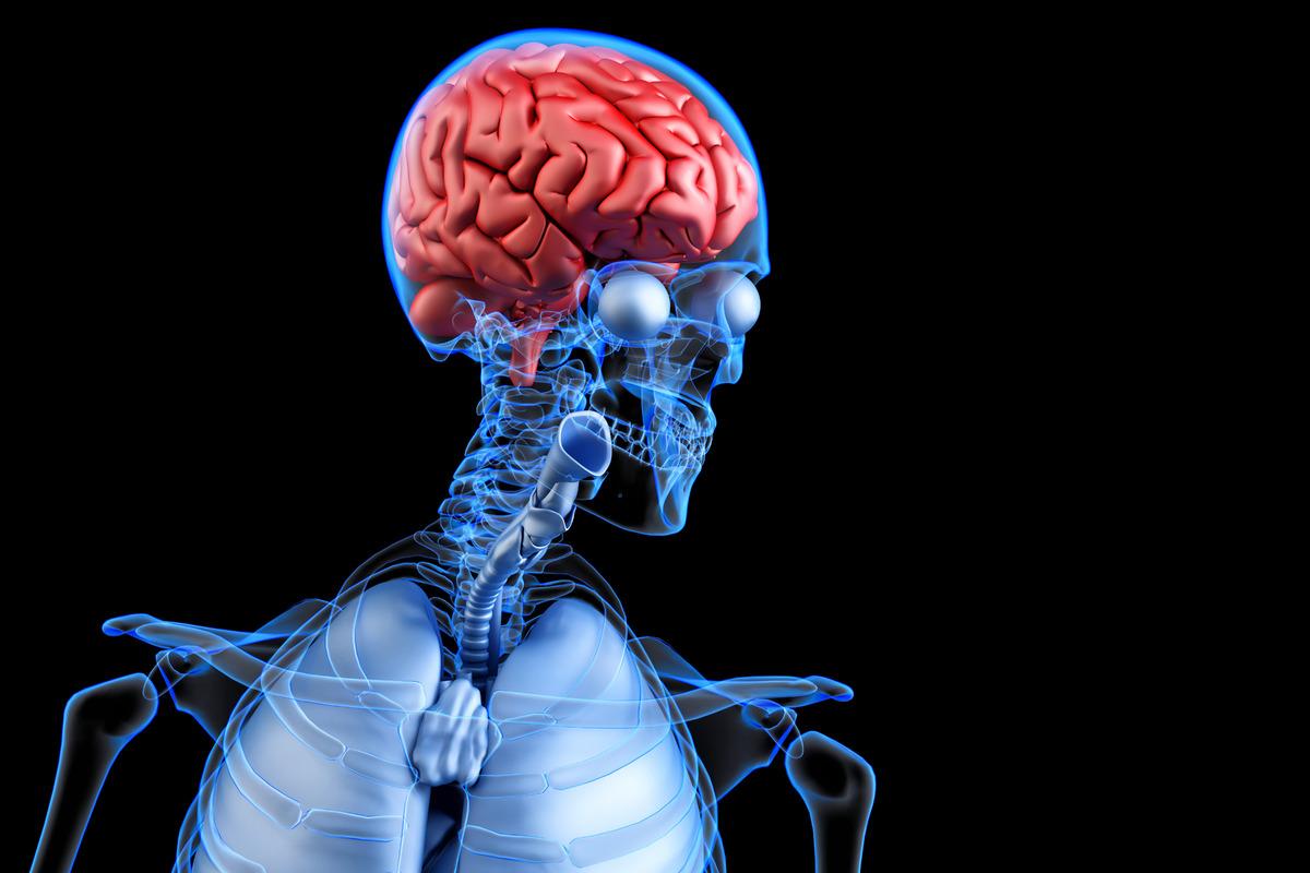 Diseased human brain. Anatomy concept. 3D illustration - slon.pics - free stock photos and illustrations
