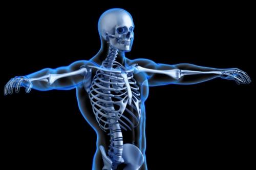 Human skeleton torso. Anatomical 3D illustration - slon.pics - free stock photos and illustrations