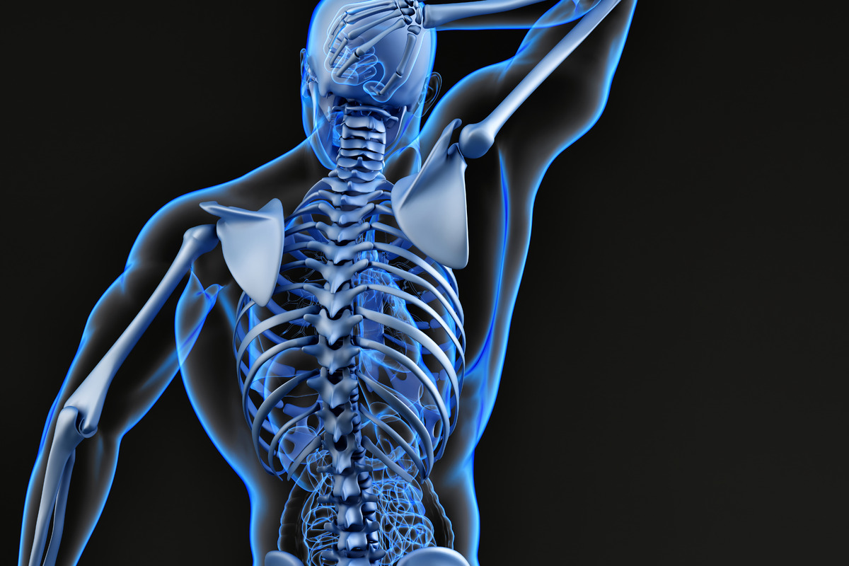 Male upper back and skeletal system. 3D illustration - slon.pics - free stock photos and illustrations
