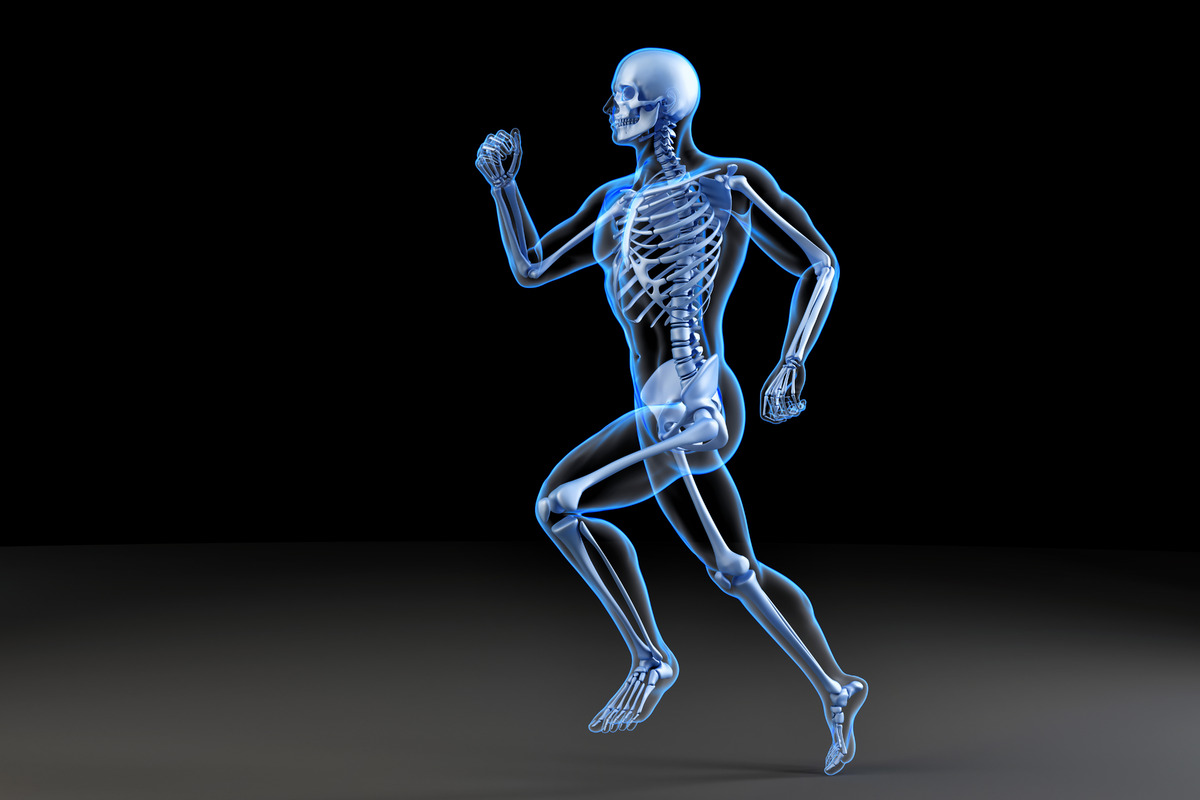 Running skeleton. Anatomical 3D illustration - slon.pics - free stock photos and illustrations