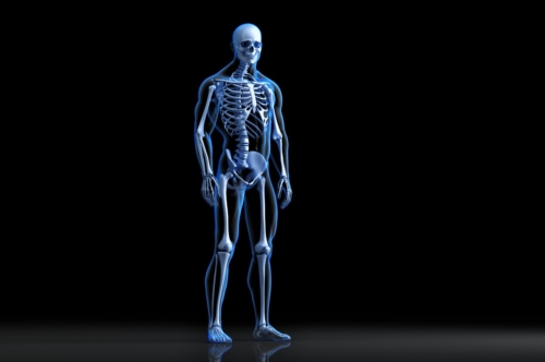 X-ray view of posing human skeleton. Anatomical 3D illustration - slon.pics - free stock photos and illustrations