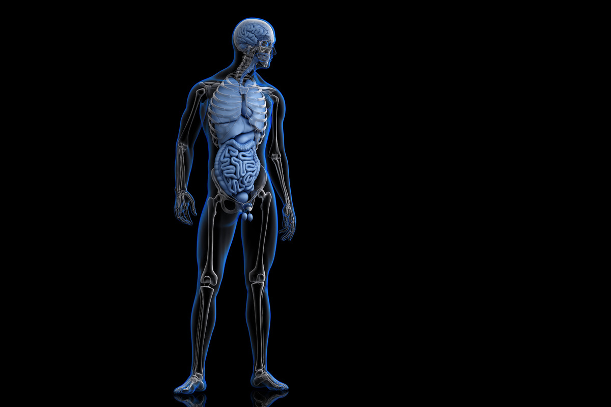 Anterior View of Human Body. 3D illustration - slon.pics - free stock photos and illustrations